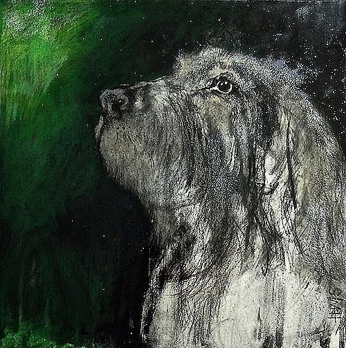 Hairy Dog With Green