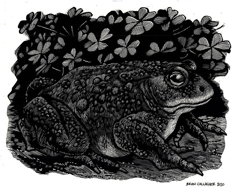 View Toad