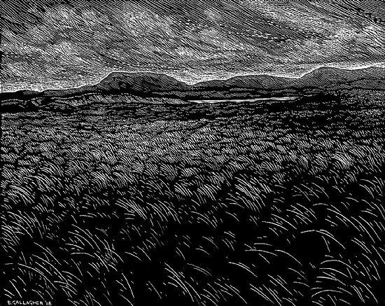 View Dunne Grass