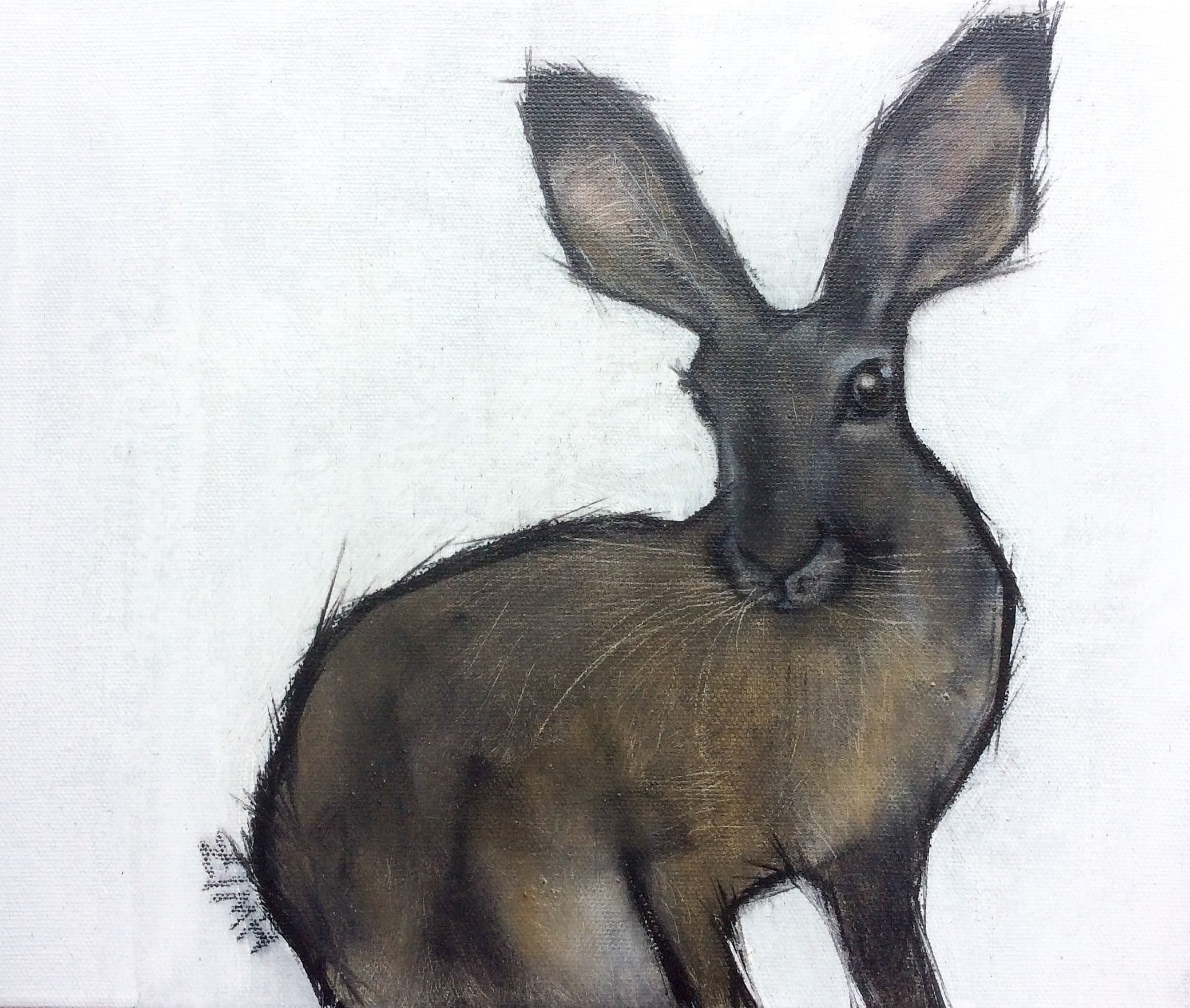 Small brown hare