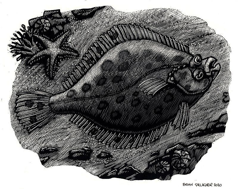View Flat Fish